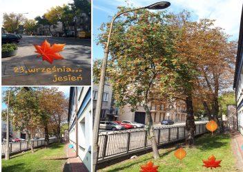 23. września –  Dzień Spadającego Liścia